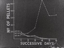 Graph of no. pellets on successive days.