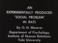 """An Experimentally Produced """"Social Problem"""" in Rats"""