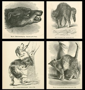 Collage of illustrations, cats and dogs exhibiting frightened and pleased behaviors.