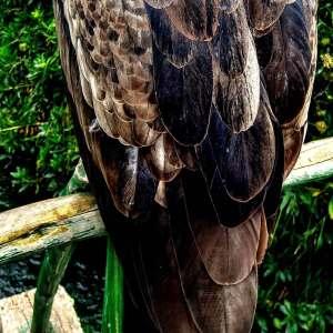 condor-medicine-weavings-athena