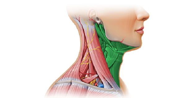 Anterior triangle of neck
