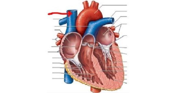 Chambers of heart