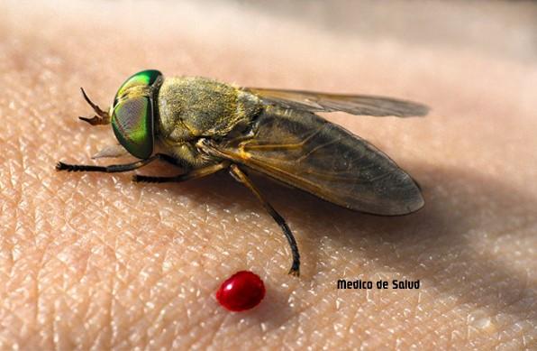 Cómo tratar una mordedura de mosca de caballo