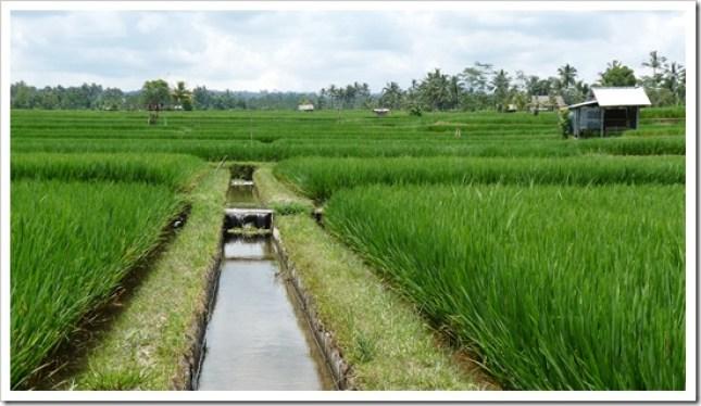 2011-03-20 Bali 055