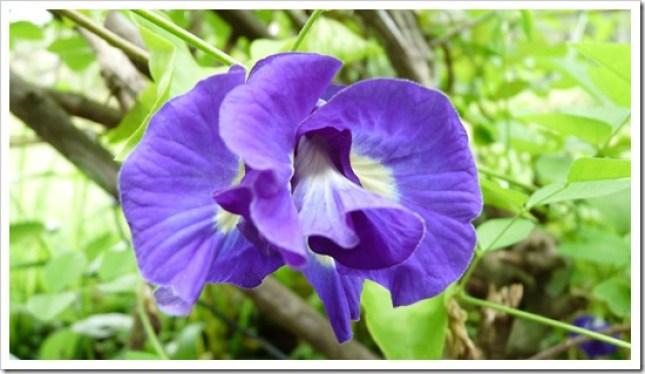 2011-03-22 Bali 052