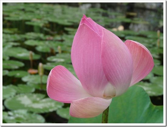 2011-03-22 Bali 156