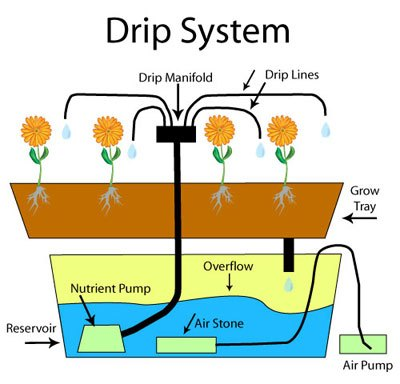 Hydroponic System: Drip – Medigrow Innovation – Grown by