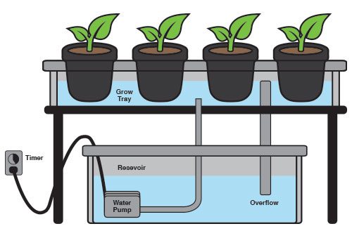 hydroponic – Medigrow Innovation – Grown by Intelligence