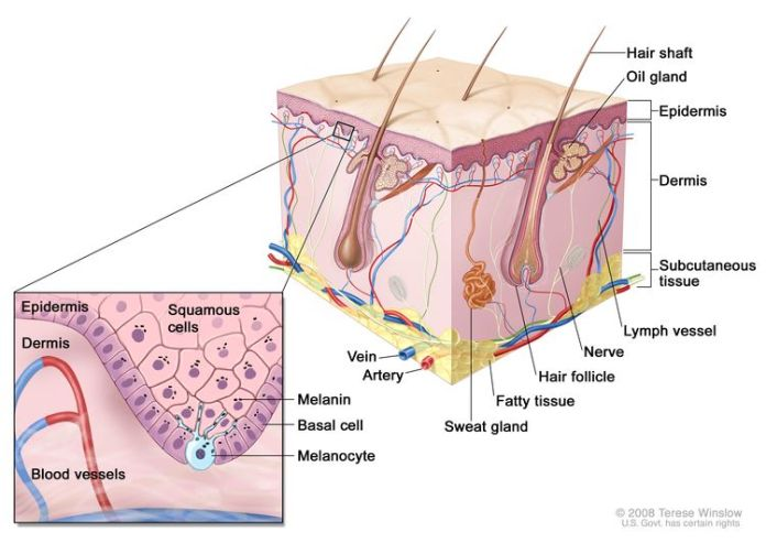 Melanoma Skin Cancer Skin Cells