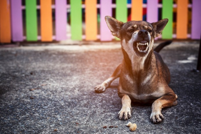 Snapping Dog and Somatic Responses