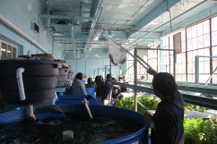"Pratt holds up one of the fish for a student tour group to see as he explains how the aquaponics system works. ""Aquaponics is kind of this symbiotic, recirculating water ecosystem where you feed the fish, they eat, and they fertilize the water,"" Pratt said. (Anne Evans/MEDILL)"