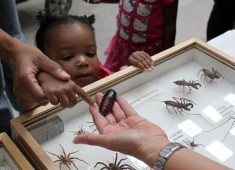 In her first visit to the Field Museum, Lilianna Cannady, 1, of Aurora, touches a Madagascar hissing cockroach held by Robin DeLaPena, collections assistant and imaging specialist in the insect division. During Identification Day brave visitors could also get their hands on a live museum millipede.