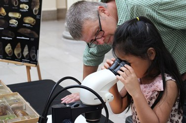 Jochen Gerber, collections manager for invertebrates, helps Sumi Lim, 6, from South Korea as she takes a closer look at Gastrocopta pentodon, a tiny mollusk just 2 millimeters in size. This mollusk is a museum specimen originally from Joliet, Illinois.