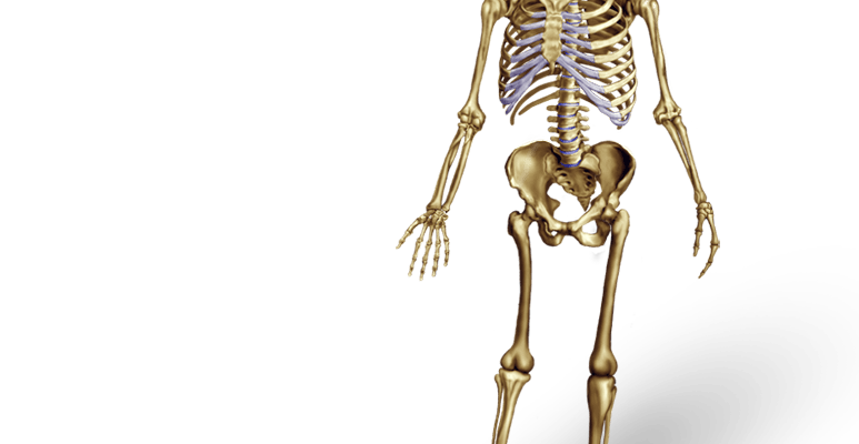 Anatomy Illustration Archives Medical Illustrations Animations