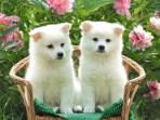 perros-lindos 1