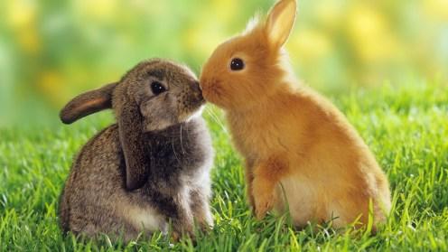 Simpáticos conejitos