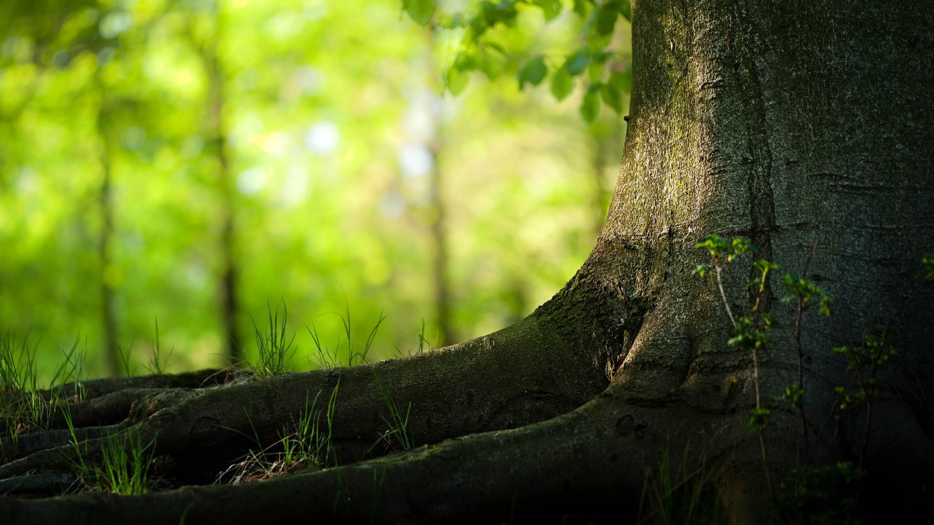 Fondos de pantalla de paisajes naturales23