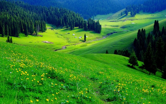 Fondos de pantalla de flora y vegetación bb