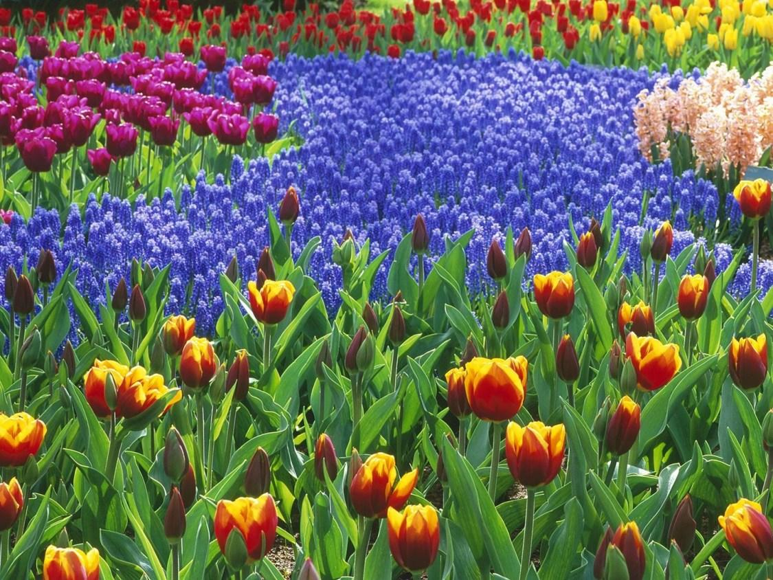 Fondos de pantalla de jardinería ab