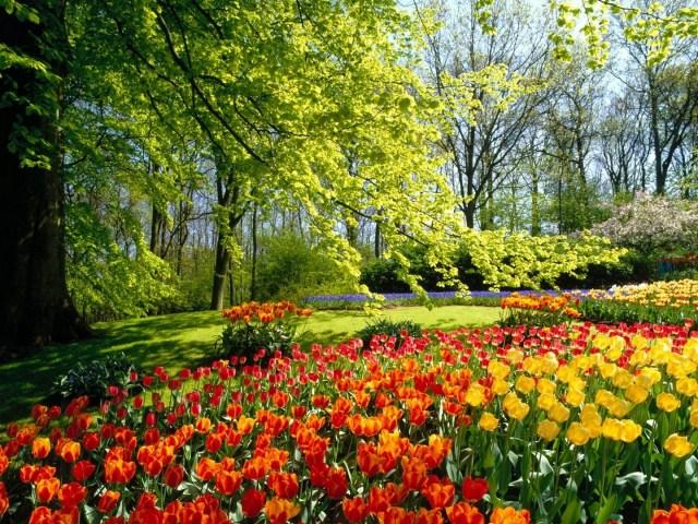 Fondos de pantalla de jardinería au