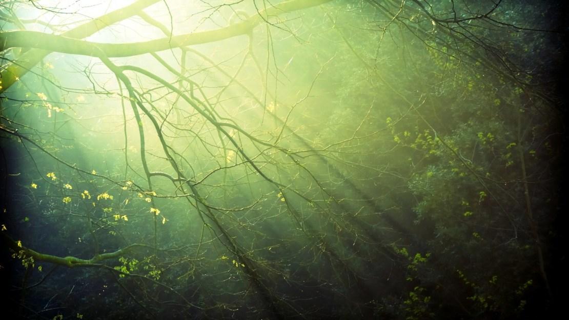 Fondos de pantalla de naturaleza al