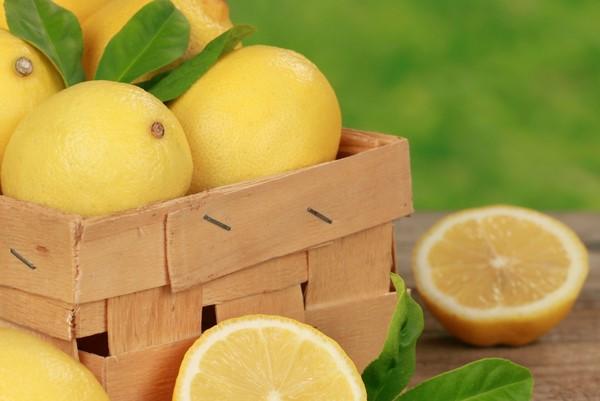 Cómo plantar limones. Ficha completa