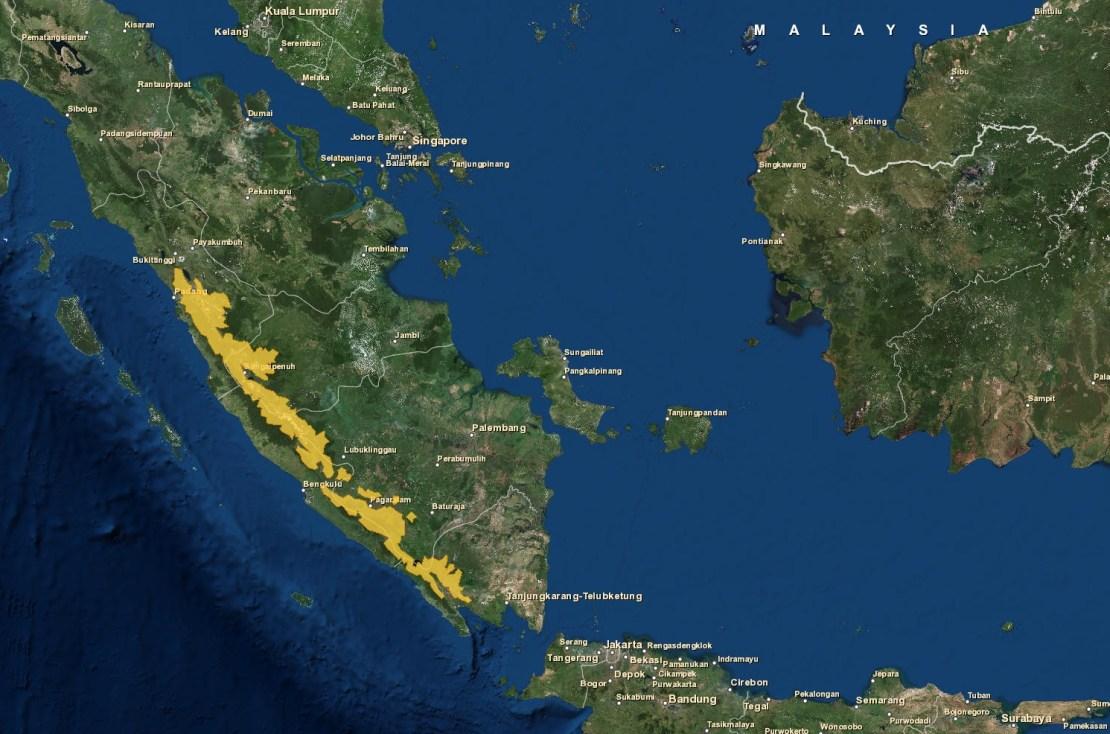 Cuco terrestre de Sumatra c