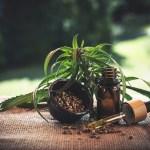Todo lo que tienes que saber de la marihuana medicinal