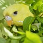 Cómo detectar y combatir el estrés en periquitos