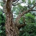 Corcho, un material ecológico muy polivalente