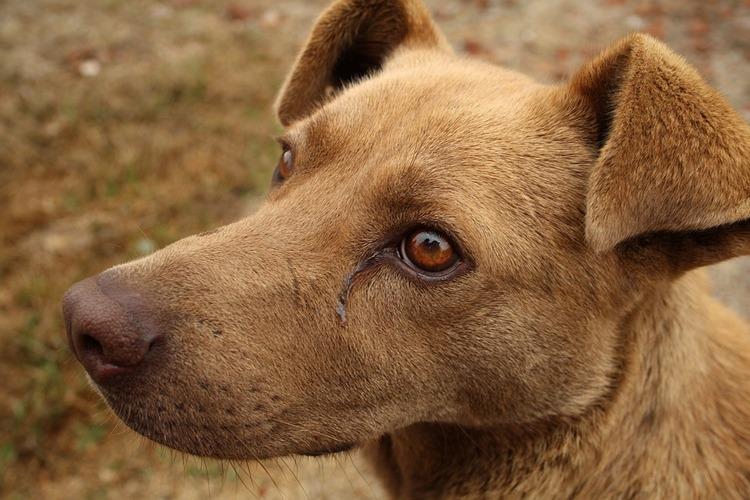 Cómo ayudar a tu mascota a recuperarse de una lesión o enfermedad