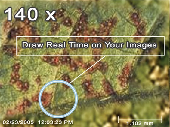 Solución portátil microscopio digital a un precio asequible.