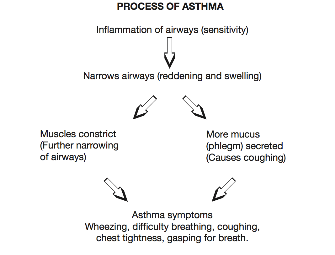how-asthma-works