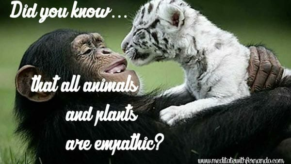 Animals have empathy.