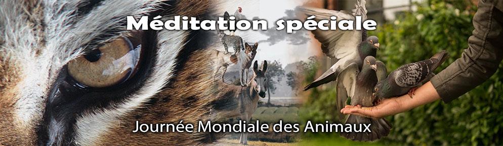 Méditation spéciale pour les animaux