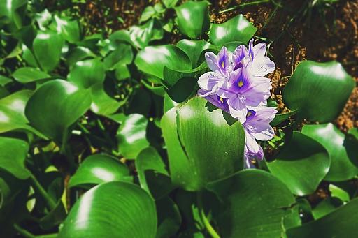 Méditation de Pleine conscience à Chambéry au printemps