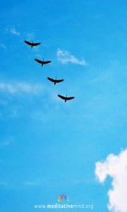 Wallpaper - Flying Birds -Mobile