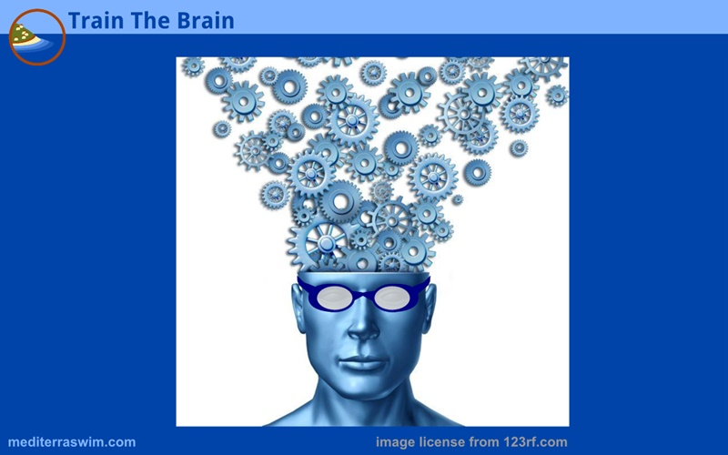1512 brainy swimmer