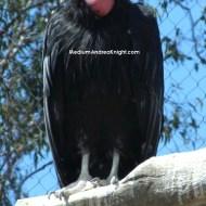 SD condor