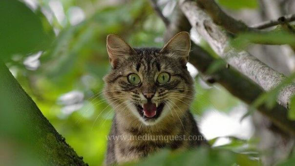 angry cat on a tree