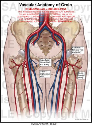 Vascular Anatomy of Groin Medical Illustration Medivisuals