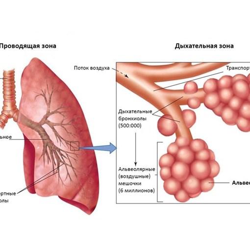 Сестринская помощь при бронхиальной астме у взрослых или детей