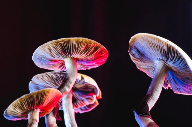 Psychedelics promote growth of neural connections that have been lost due to depression