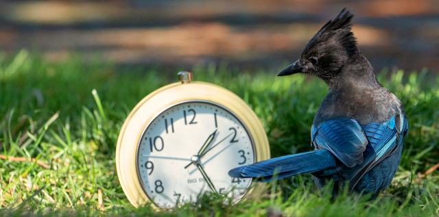 Genetically-predisposed 'morning people' adjust to daylight savings time faster