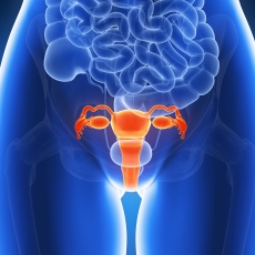 Uterine Diseases | Labor complications, The Knowledge Ground