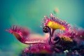 macro-alien_plant_by_nitrok-d7r227k