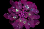 macro-flatflowers-small