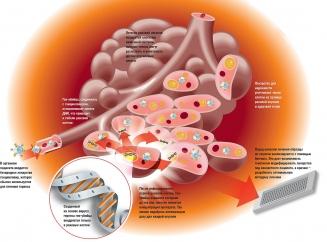 Распад опухоли при онкологии: симптомы, прогноз