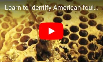 Identifikacija Americke kuge za 90 sekundi(