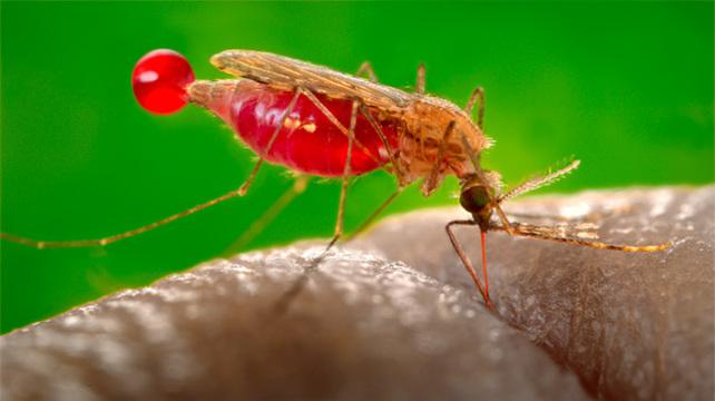 Малярия - причины, диагностика и лечение